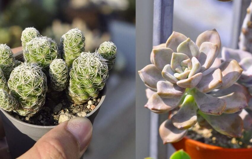 Buy the best succulents from online